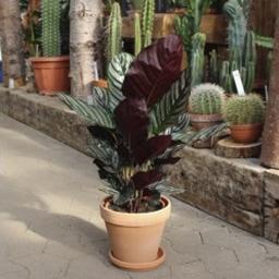Store grønne planter