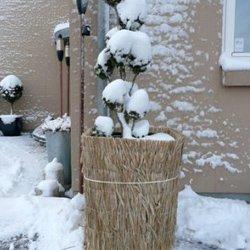 Frostmåtte/Vinterbeskyttelse