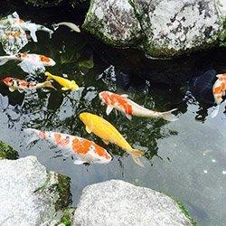 Vand -og fiskepleje