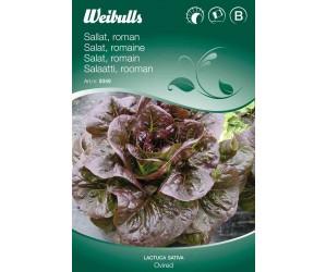 Salat, Romaine