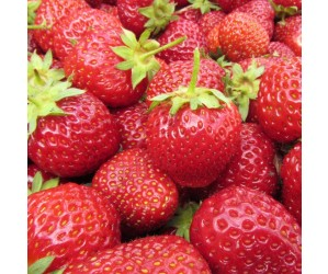 Jordbær Polka