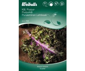 Purpur kål frø